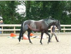 Pilates for your horse