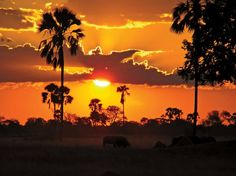 Sunset over the African plains in Zimbabwe's Hwange National Park. Photo provided by OAT traveler Susan Giaccotto. #Africa #Sunset
