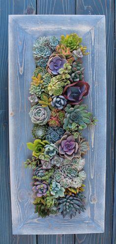 28 x 12 Framed Succulent Vertical Garden-Made to