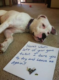 100 Best Dog Shaming Moments