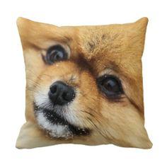 Pomeranian Throw Pillows ~ several sizes available ~ http://www.zazzle.com/pomeranian_portrait_throw_pillows-189287548202367280