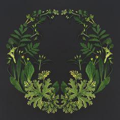 Flower mandala, flower arrangements, mandala, mandala art, mandala design, blomstermandala, blomsterpill @helenalyth