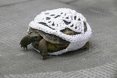 Turtle cozy. HAHAHA. Gimme the pattern, Imma make one.
