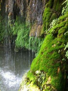 Krause Springs - Beautiful waterfall moss!!