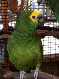 Find out how four staffers do it at The Parrot Garden at Best Friends Animal Society.