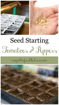 Today I sat down and began planting some of my tomato and pepper seeds!  I planted two different varieties of each.
