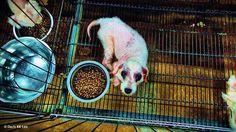 Corinne's Blog | SPCA ED's musings, announcements, interesting newsy ...