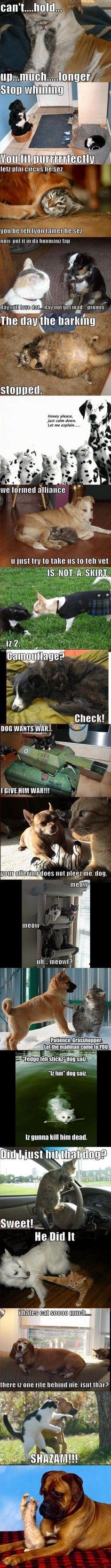 Oldie men Goldie: Katte og hunde Compilation
