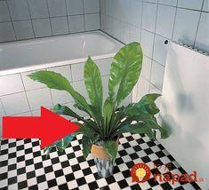 Tieto izbovky sú pre kúpeľňu ako stvorené! Korn, Good Advice, Cactus Plants, Plant Leaves, Gardening, Health, Diy, Decorations, Health Care