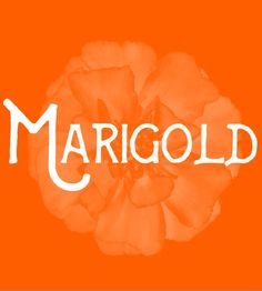 Marigold - Flower Baby Names for Girls - Photos Unique Girl Names, Baby Girl Names, Baby Names And Meanings, Names With Meaning, Marigold Flower, Flower Names, Character Names, Writing Resources, Love At First Sight