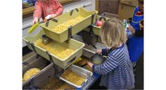 Scooping and pouring corn, great for strengthen hand and wrist muscles.
