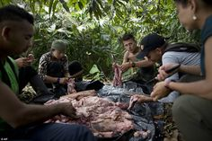 Rebel soldiers of the FARC work together in skinning the meat off a hog carcass in the northwest Andes Secret Life, The Secret, Female Fighter, Amazon Rainforest, Guerrilla, Rare Photos, Weird Facts, Viral Videos, Rebel