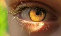 Image discovered by Clove L. Find images and videos about eyes, eye and yellow eyes on We Heart It - the app to get lost in what you love. Pretty Eyes, Cool Eyes, Beautiful Eyes, Photo Oeil, Rare Eyes, Amber Eyes, Aesthetic Eyes, Golden Eyes, Eye Photography