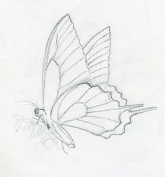 make butterfly sketch quickly and easily. speed is the key - simple butterfly sketch Key Drawings, Art Drawings Sketches, Animal Drawings, Pencil Drawings, Animal Sketches Easy, Easy Butterfly Drawing, Butterfly Sketch, How To Draw Butterfly, Monarch Butterfly