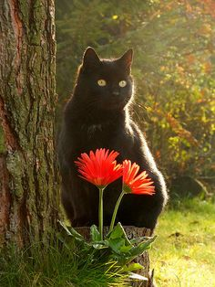Two of my favorite things, a black kitty cat and flowers.