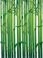 Tapeten - Fototapete Bamboo - 254 cm x 183 cm