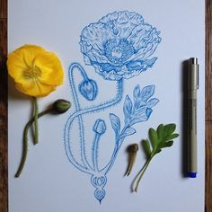 blue poppy drawing Poppy Drawing, Blue Poppy, Flower Sketches, Watercolor Flowers, Watercolour, Ink Pen Drawings, Poppies, Design Inspiration, Badges
