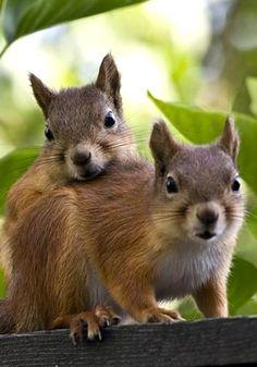 siblings (Feelin' Squirrely group board)