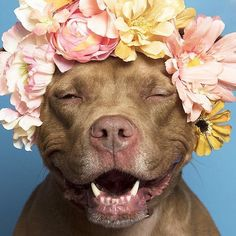 'Pit Bull Flower Power' Already Found Homes For 140+ Pits (New Pics) #PitBullPics