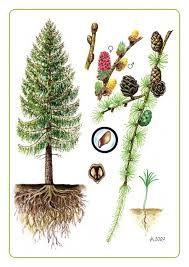 Výsledok vyhľadávania obrázkov pre dopyt karty roční doby montessori