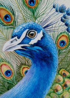 "See You At The Zoo, Pretty Peacock by Jean Weiner Watercolor ~ 3-1/2"" x 2-1/2"""
