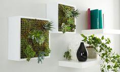 """Laut aktuellem Trend Report 2017 liegt auch dieses Jahr bei den Einrichtungsthemen """"indoor gardening"""" wieder voll im Trend. Vor allem ein vertical garden..."""
