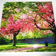 Beautiful Blank Card 'Spring Blossom' Handmade by CardsbyGaynor, £1.95