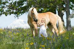 Haflinger Horse & little girl