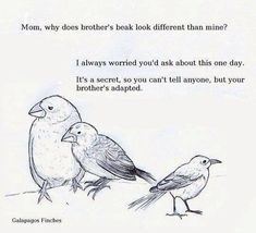 biology jokes evolution, darwin, adapt, a - biology Funny Images, Best Funny Pictures, Happy Pictures, Biology Jokes, Chemistry Jokes, Social Work Humor, Classroom Memes, Biology Classroom, Classroom Ideas