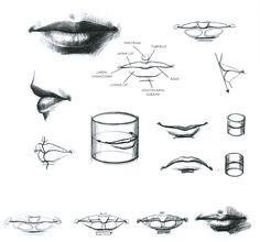 nose drawing anatomy - Google 検索