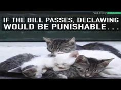 New Jersey may be the first state to outlaw declawing of cats.Funny cat ...