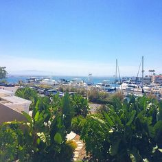 A very special place 💙 🔹🔹🔹🔹🔹🔹🔹🔹🔹🔹🔹🔹 #westcoast #california #travelphotography #travel #travelgram #traveling #travels #travelblog #travelblogger #travelblogging #travelblogs #wanderlust #travelinstagram #cali #calilove #world #worldtraveler #traveling #traveller #traveldiaries #travelbug #travelphoto #traveltheworld #californiadreaming #sandiego #coronado #beach #ocean