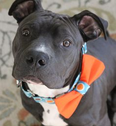 Love this website.  Great collars and cute flower or bowtie accessories for the pups! A portion of the proceeds go to pittie rescues too!