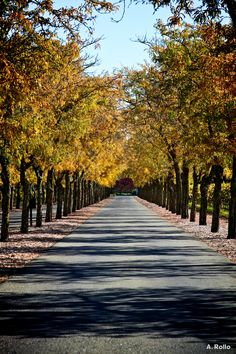 Sterling Vineyards, Napa Valley CA
