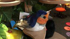 Schwalbe | Singvogel Bird, Videos, Swallows, Birds