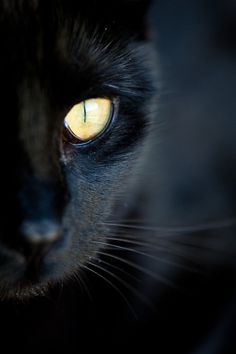 These pretty kittens will make you amazed. Cats are incredible companions. Crazy Cat Lady, Crazy Cats, Cute Cats, Funny Cats, Adorable Kittens, Regard Animal, Black Cat Aesthetic, Black Cat Art, Black Cats