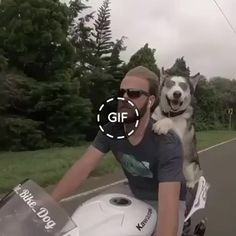 Excellent company in the form of a guy and a dog on a motorcycle