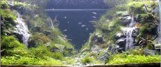 Ça vous dirait de construire une cascade dans votre aquarium? – L'Humanosphère