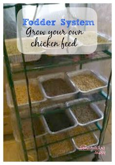 What is a Fodder System? grow your own chicken feed supplements ~The Homesteading HIppy