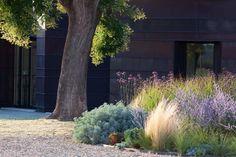 Planting: Drought Tolerant Garden – Greige Design