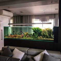"""1,961 Synes godt om, 29 kommentarer – Luca Galarraga (@luca_galarraga) på Instagram: """"Manutenção Aquabase finalizada! Aquabase maintenance done! #aquarium #aquarioplantado #aquario…"""""""