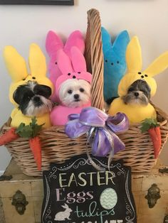 Custom Made Easter Candy dog costume for your small pet/dog Easter Cats, Easter Peeps, Happy Easter, Easter Bunny, Dog Halloween Costumes, Pet Costumes, Dog Christmas Pictures, Puppy Collars, Pet Paws