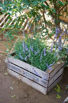 lavender - great re-use of a crate.