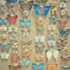 Poster | THE BUTTERFLY COLLECTION von Cassia Beck | more posters at http://moreposter.de