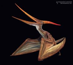 Pteranodon longiceps by Swordlord3d on DeviantArt