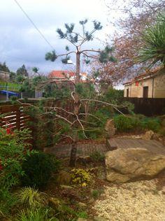 Pine tree to be niwaki... Work on January, 2014