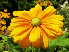 pretty flowers pictures | The Four Seasons: Pretty flowers at Disney's California Adventure