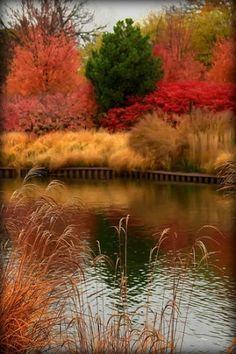 Fall lakeside.