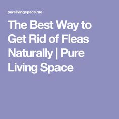 The Best Way to Get Rid of Fleas Naturally | Pure Living Space
