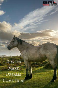 Horses Make Dreams Come True ❤ quote Horse Hay, Horse Love, Horse Girl, Majestic Horse, Beautiful Horses, Equestrian Quotes, Equestrian Problems, Inspirational Horse Quotes, Horse Riding Quotes